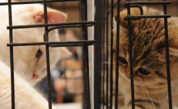 I vigili salvano 18 gattini all'ammasso