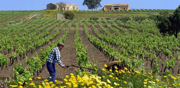 L'ultimo scippo all'agricoltura che fa infuriare la Sicilia